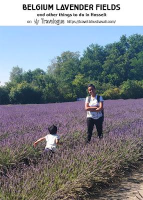 Limburg Lavendel Wat te doen in hasselt