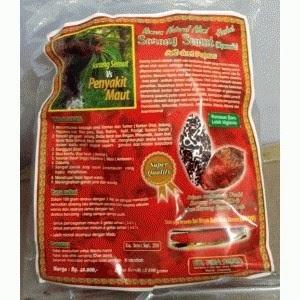 Jual Sarang Semut Asli 100 gram UD. FIRA PAPUA.