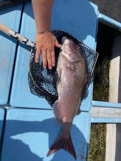 釣船民宿共栄丸 真鯛