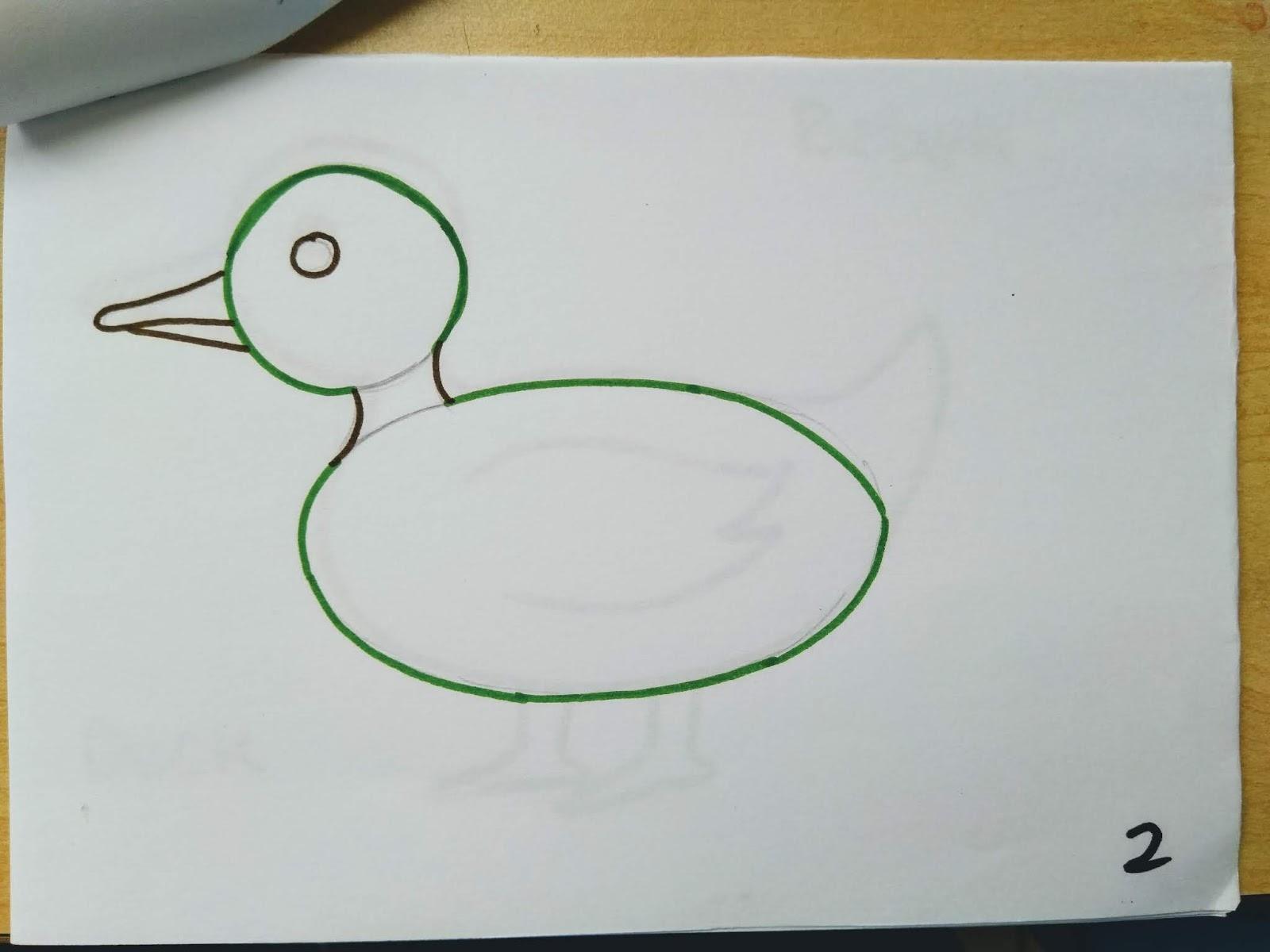 Cara Menggambar Hewan Bebek