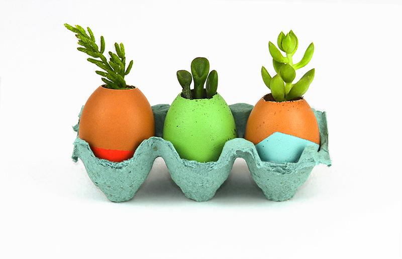 ovos = vasos de plantas?