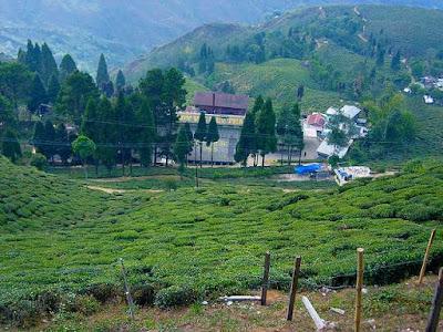 Happy Valley - Second oldest tea estate in Darjeeling