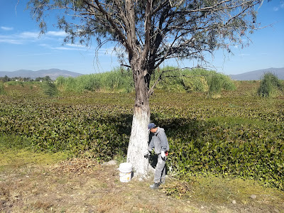 laguna de yuriria lake conservation reforestation ecosystem guanajuato mexico white paint tree