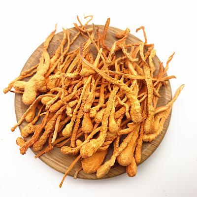 Cordyceps Mushroom Company in Latur