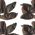 Garcinia indica, Kokum Spice name in different Indian languages (regional)