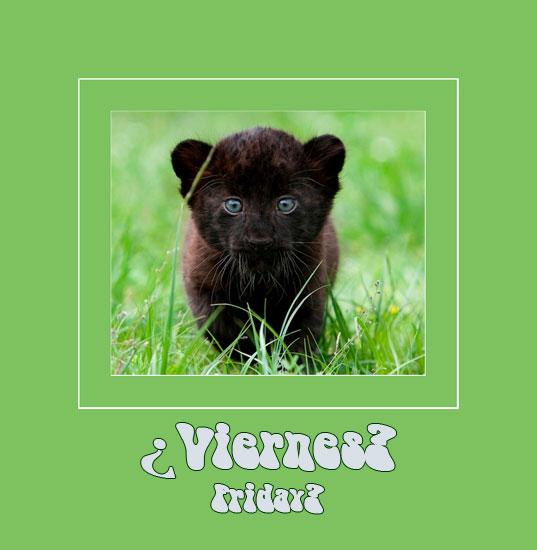 black-panther-cub