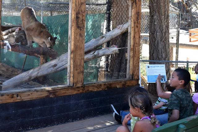 Big Bear Alpine Zoo em Big Bear Mountain