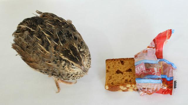 Panes de Vondelmolen degustabox agosto
