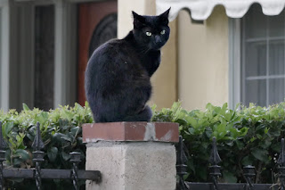A feral black cat on a fence