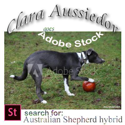 Clara Aussiedor 6 months plus