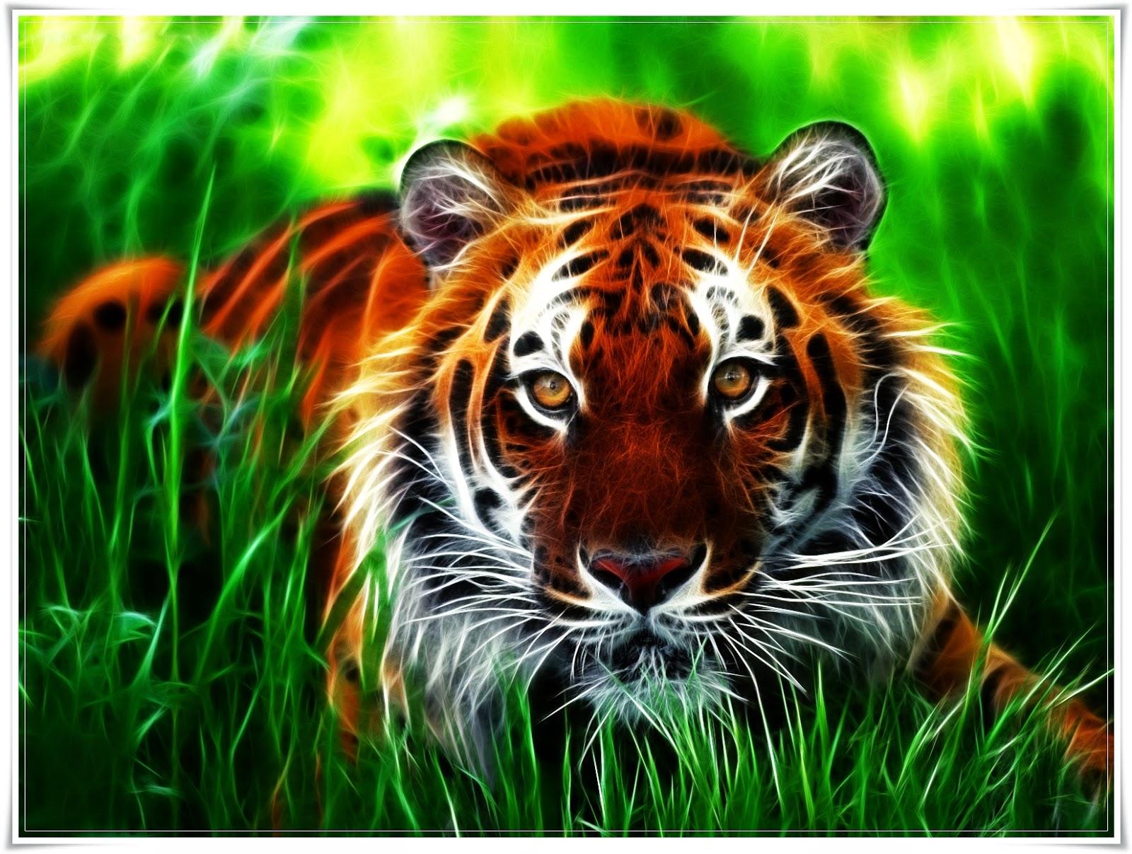 wallpaper gambar harimau