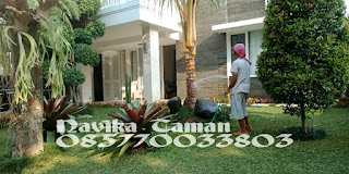 Tukang Taman Bogor - Tukang Rumput Taman Bogor