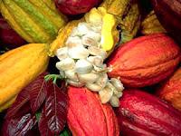 Makalah Tentang Pupuk Organik  Budidaya Kakao Budidaya Tanaman Kakao Atau Budidaya Coklat Review