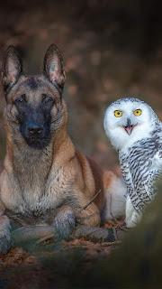 Dog With Owl Mobile HD Wallpaper