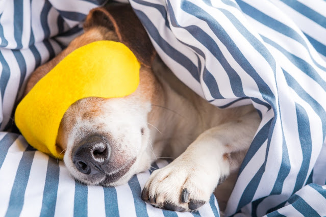 Why Dogs Sleep So Much?: The Science Behind Why Your Dog Is Always Asleep