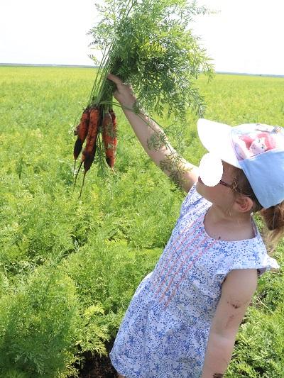 champs-carottes-blédina-france