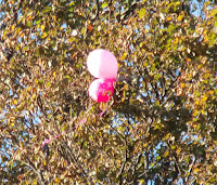 balloons stuck in a tree