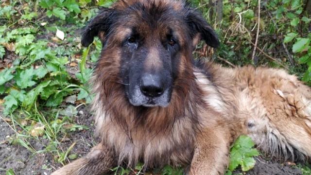 Похороненная заживо собака выбралась из могилы и пошла домой