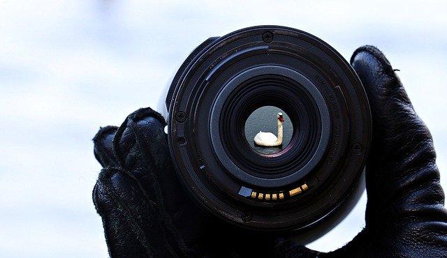 Animal Photography Venture