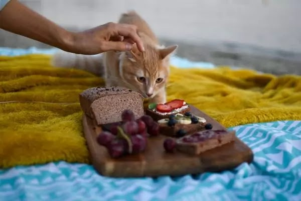 13 Healthy Human Food That Your Cat Can Eat