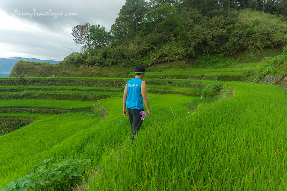 The author walking along the edges of the rice paddies