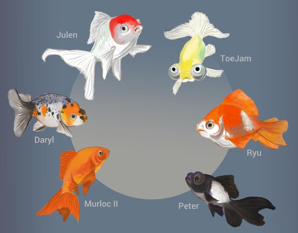 fishportrait212-12.jpg