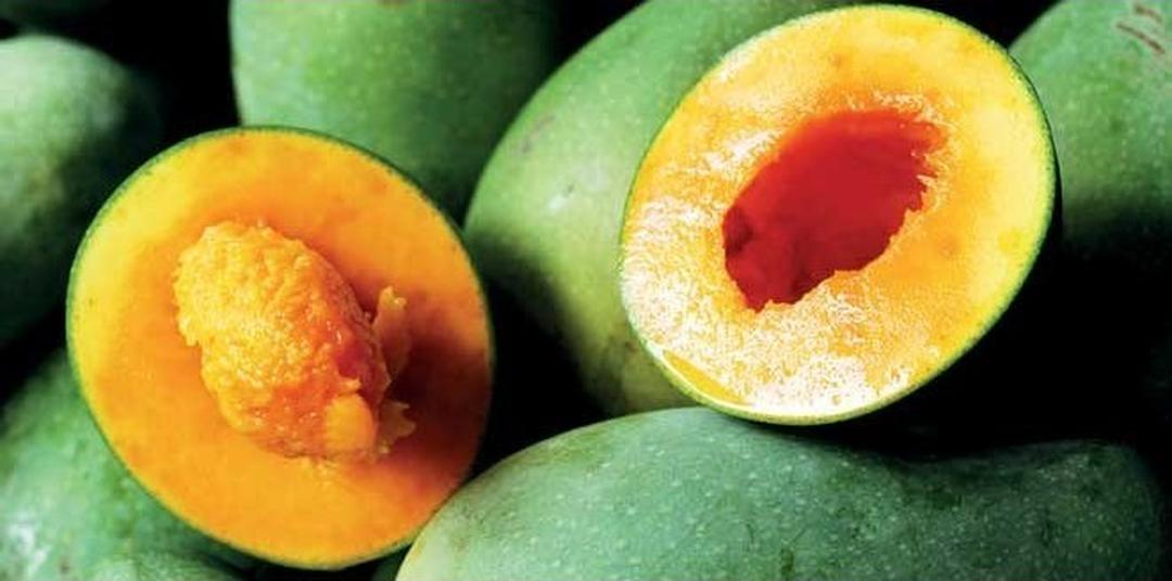 Trend 2021! Bibit Buah Mangga Alpukat Kota Bekasi #jual bibit buah buahan