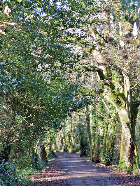 Walking through trees to Pentewan, Cornwall
