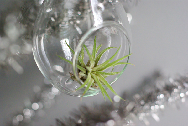 Oleander and palm air plant christmas ornaments