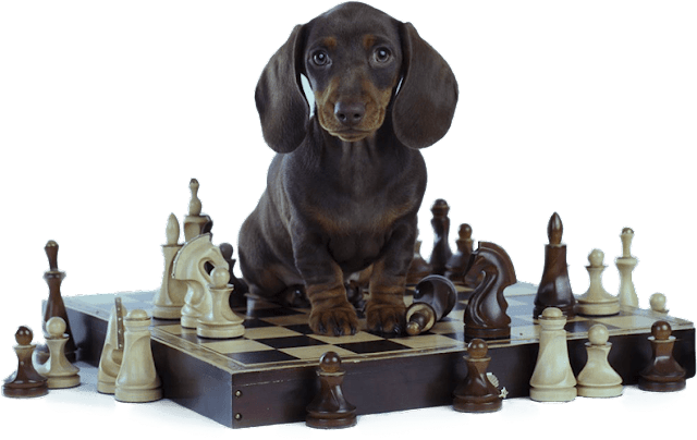 Canine Obedience, or How to Train Your Dog