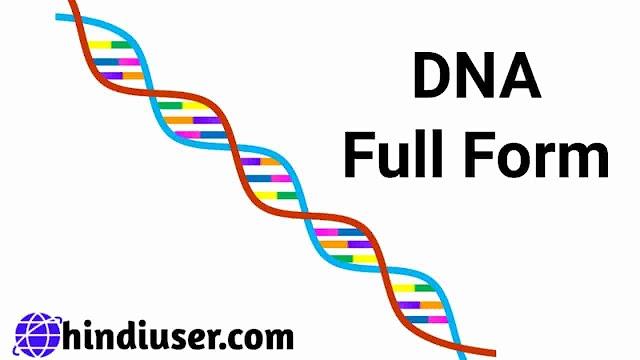 DNA Ka Full Form और DNA Kya Hai यह जानें हिन्दी में