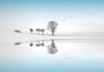 Arboles paisaje blanco