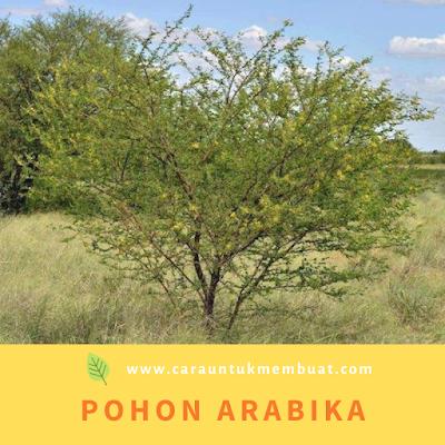 Pohon Arabika