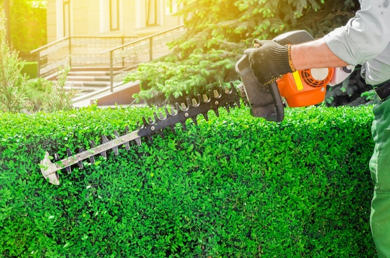 trim-shrubs