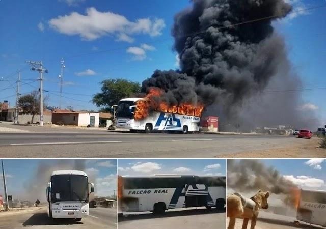 Um ônibus da empresa São Luiz (Falcão Real), empresa que faz a linha Juazeiro/Salvador