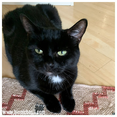 Black Cat Appreciation Day 2020 with Parsley Sauce ©BionicBasil® Intense Cat