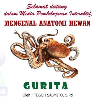 Mengenal Anatomi Hewan Laut Gurita (Ilmu Pengetahuan Alam)