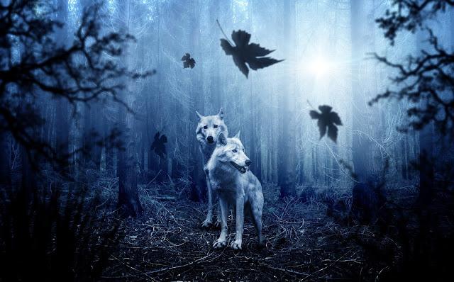 dwa wilki w lesie zagubienie przewodnik odnalezienie ekspresja wewnętrzna siła insytynt
