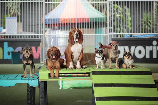 perros-medellin-envigado-dogs-cool