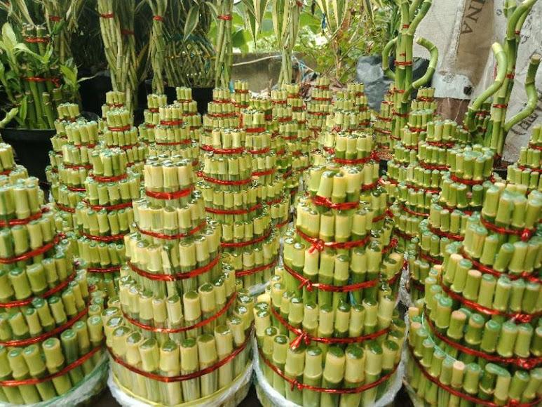 Bambu Hoki 5 susun pagoda susun 5 Semarang