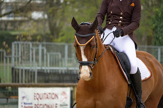 Chestnut horse being ridden in a dressage saddle at a competition