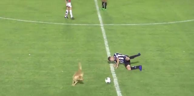 كلب يقتحم ملعبًا ويعرقل أحد اللاعبين