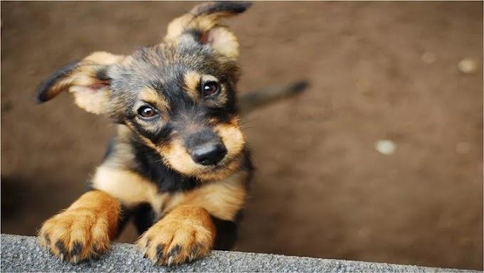 Porto Velho disponibilizará 72 pontos de vacinação para cães e gatos
