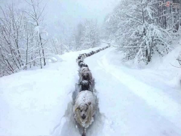 Immagini Stupide Di Natale.La Vita E Tutta Un Click Animali Nella Neve
