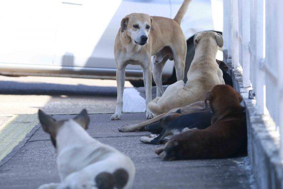 Governo do Estado sanciona Lei que obriga estabelecimentos a comunicar maus tratos aos animais em Rondônia