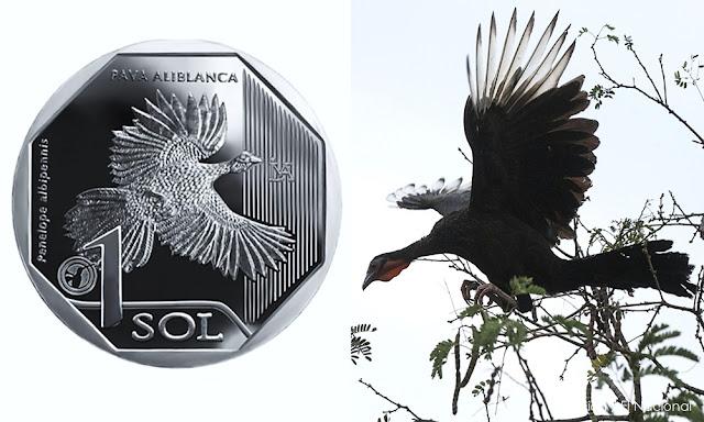 Moneda de S/ 1 alusiva a la pava aliblanca elegida como la mejor del mundo