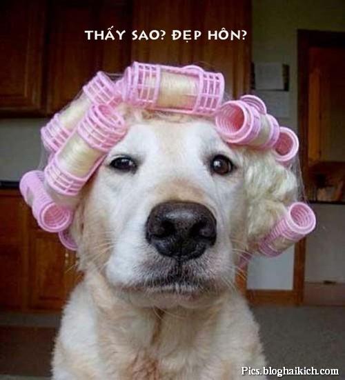 Chú chó làm đẹp