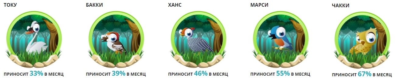 Инвестиционные планы Mega-Birds 2