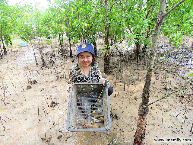 "Finding ""lokan"" at the mangrove area"