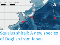 https://sciencythoughts.blogspot.com/2020/07/squalus-shiraii-new-species-of-dogfish.html